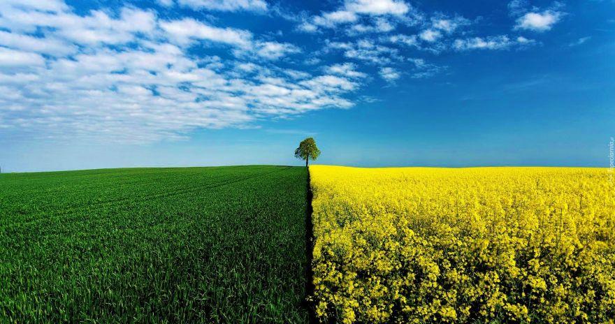 7 nawyków, dzięki którym i ty ratujesz środowisko naturalne!
